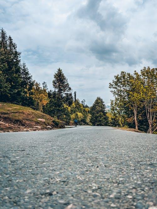 Fotos de stock gratuitas de arboles, carretera, perspectiva