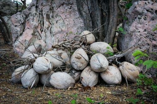 Brown Coconut Shells