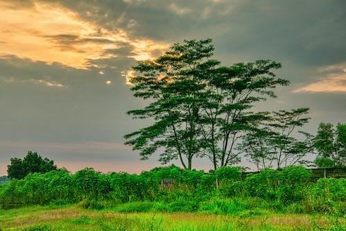 คลังภาพถ่ายฟรี ของ ขอบฟ้า, ชนบท, ต้นไม้, ตอนเย็น