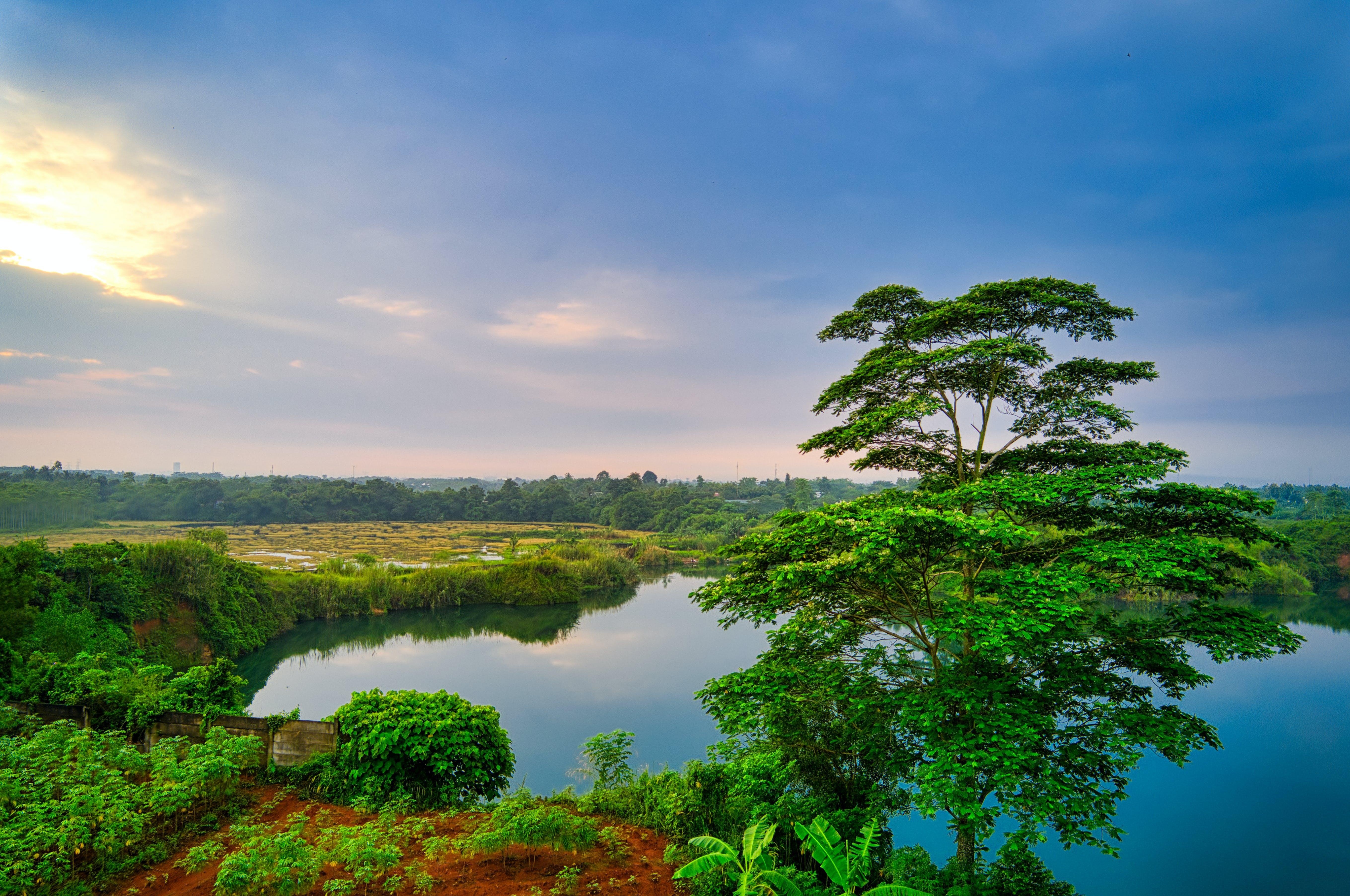 Green Tree Across Body of Water
