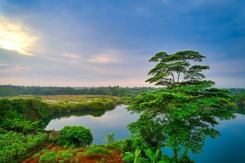 Darmowe zdjęcie z galerii z chmury, drzewa, gospodarstwo, indonezja