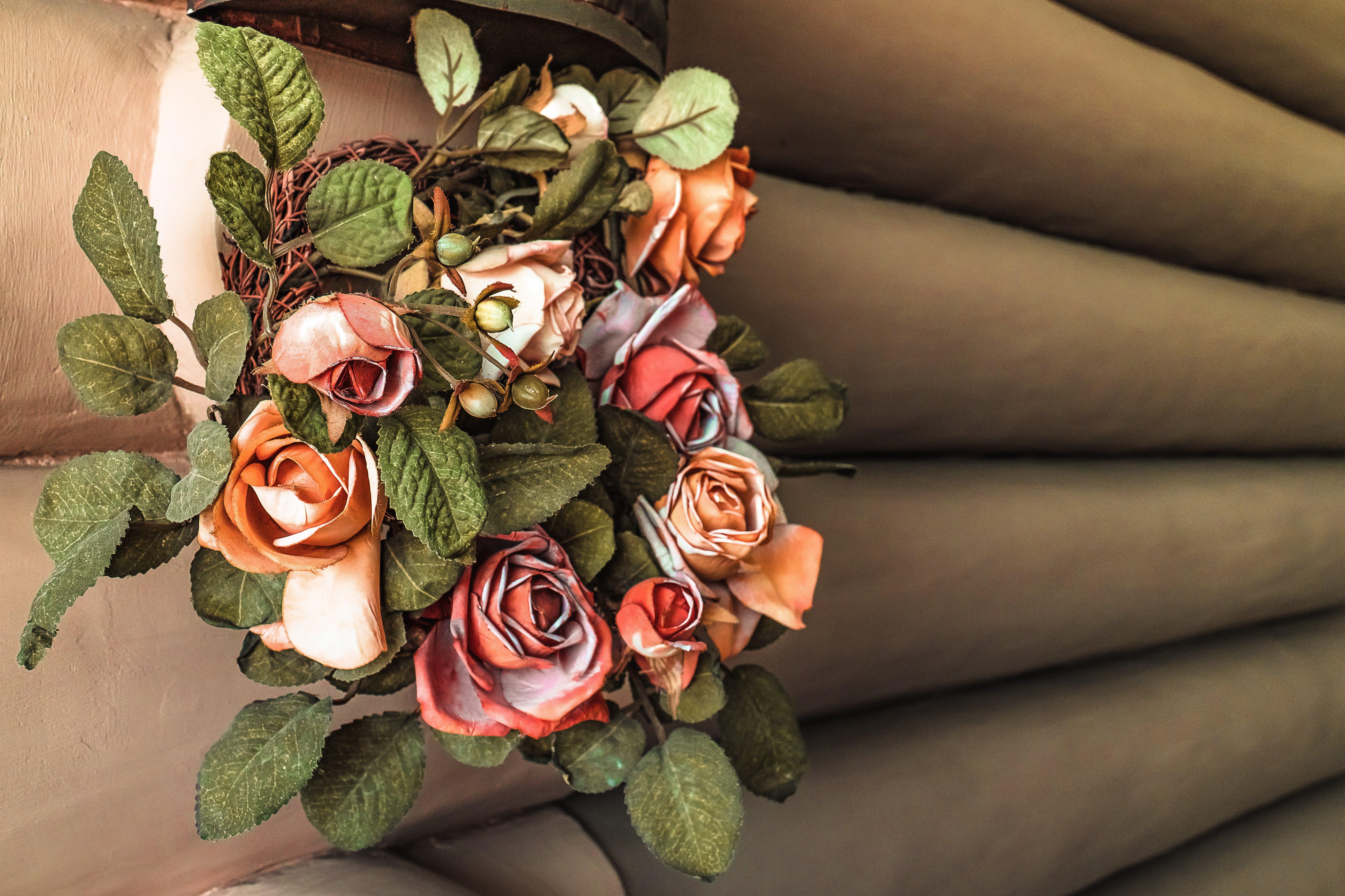 Kostenloses Stock Foto zu blumenwandorangenrosenblätter heller schatten