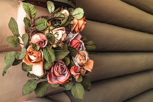 Photos gratuites de fleurs mur orange rose feuilles lumière ombre