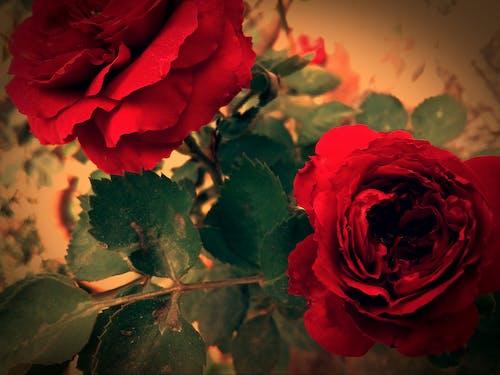 Ingyenes stockfotó beltéri növények, Első virágok, gyönyörű virág, háttérkép témában