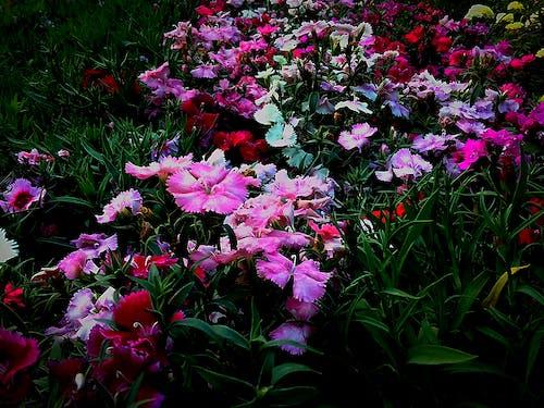 Ingyenes stockfotó 4k-háttérkép, asztali háttérkép, gyönyörű virág, gyönyörű virágok témában