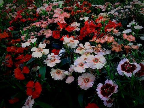 Ingyenes stockfotó 4k-háttérkép, asztali háttérkép, gyönyörű virágok, háttér témában