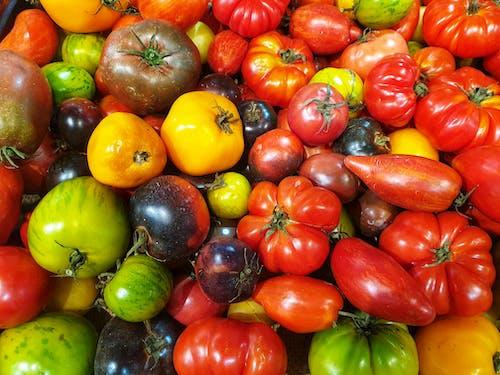 Foto profissional grátis de tomates, tomates da herança