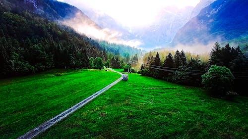 คลังภาพถ่ายฟรี ของ ต้นสน, ต้นไม้, ภูมิทัศน์, ภูมิทัศน์ที่สวยงาม