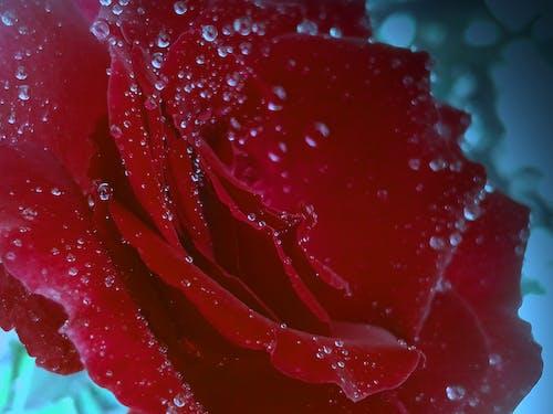Ingyenes stockfotó 4k-háttérkép, asztali háttérkép, gyönyörű virág, háttér témában