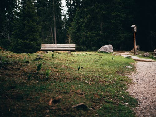 Wood bench and green trees