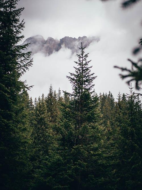 ビュー, 屋外, 山, 日光の無料の写真素材