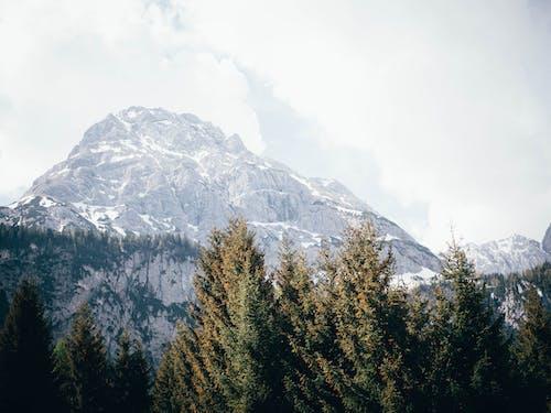 ağaçlar, dağ, doğa, kar içeren Ücretsiz stok fotoğraf