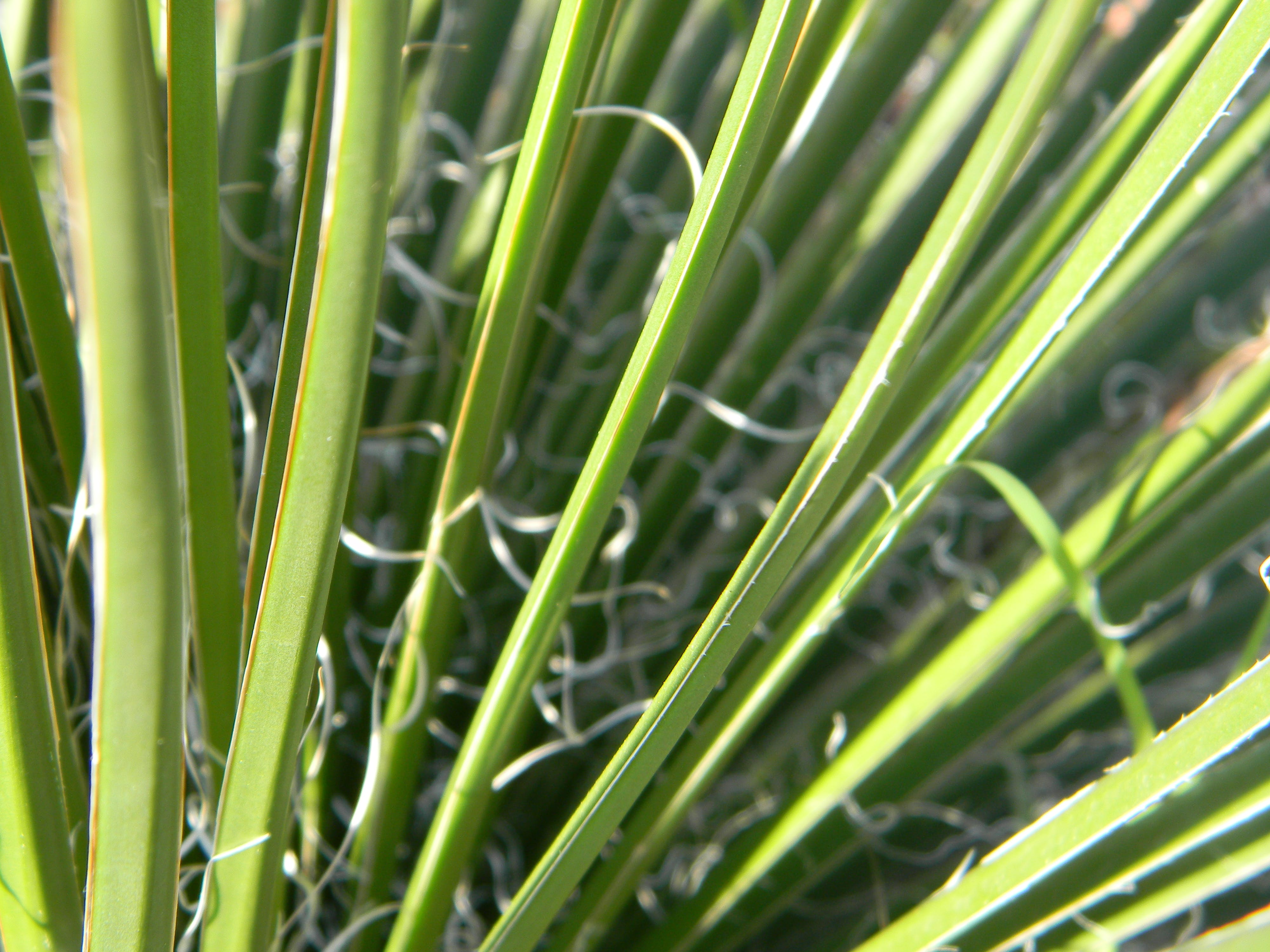 Free stock photo of grass, palms, palm