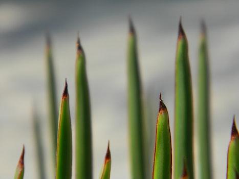 Free stock photo of grass, palms, palm, sharp