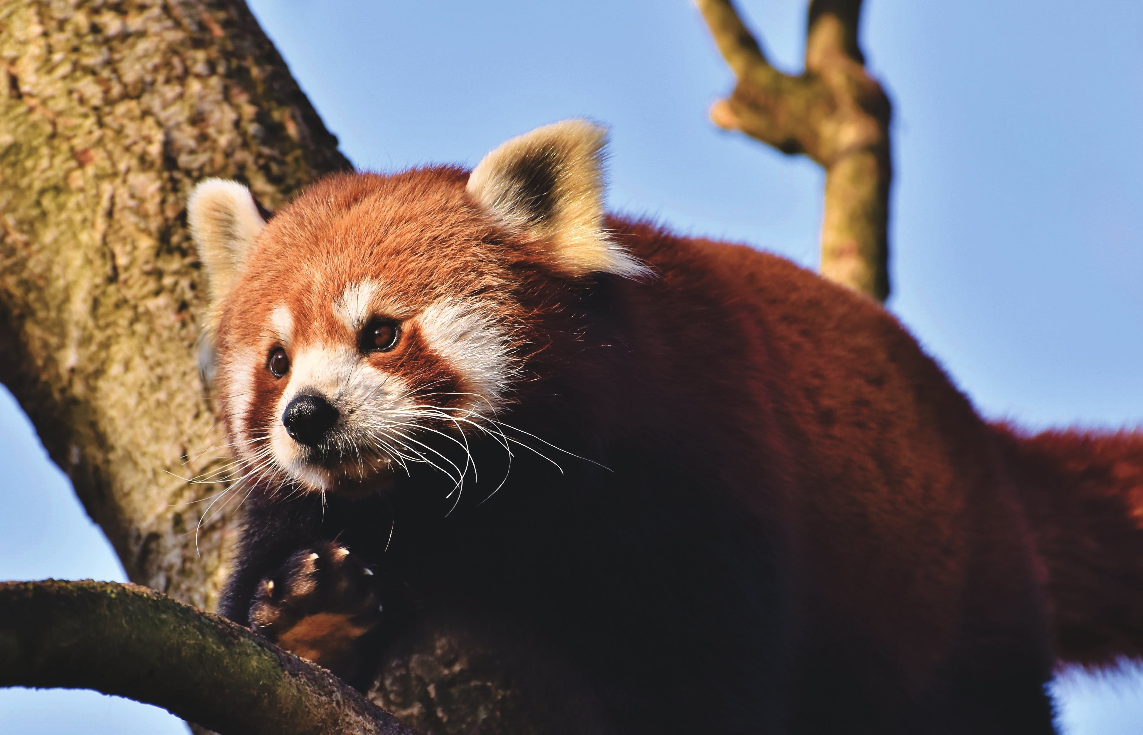 Δωρεάν στοκ φωτογραφιών με άγρια φύση, άγριο ζώο, άγριος, απειλούμενα είδη