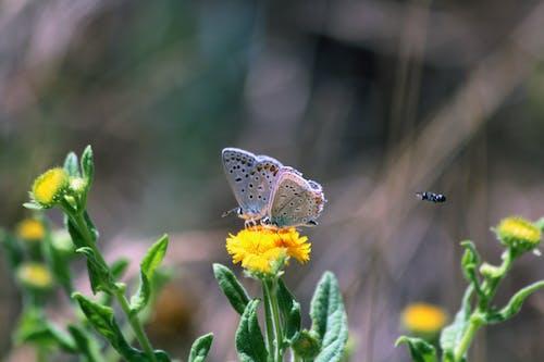 Gratis lagerfoto af bi med sommerfugle