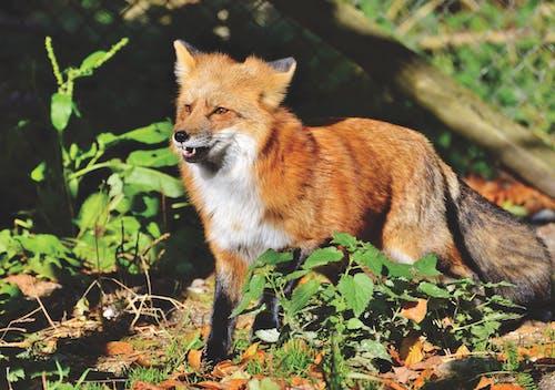 Foto d'estoc gratuïta de animal, animal salvatge, bufó, depredador