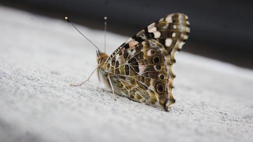 Kostenloses Stock Foto zu insekt, insekten, mutter natur, natur