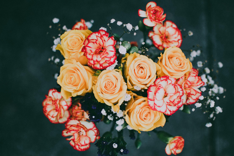 植物群, 綻放, 花, 花束 的 免費圖庫相片