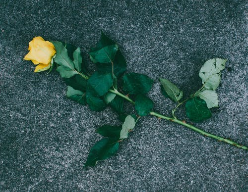 Gratis arkivbilde med blader, blomst, blomsterblad, blomstre