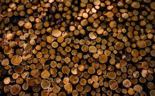 Imagine de stoc gratuită din buștean, grămadă, grămadă de lemn, lemn