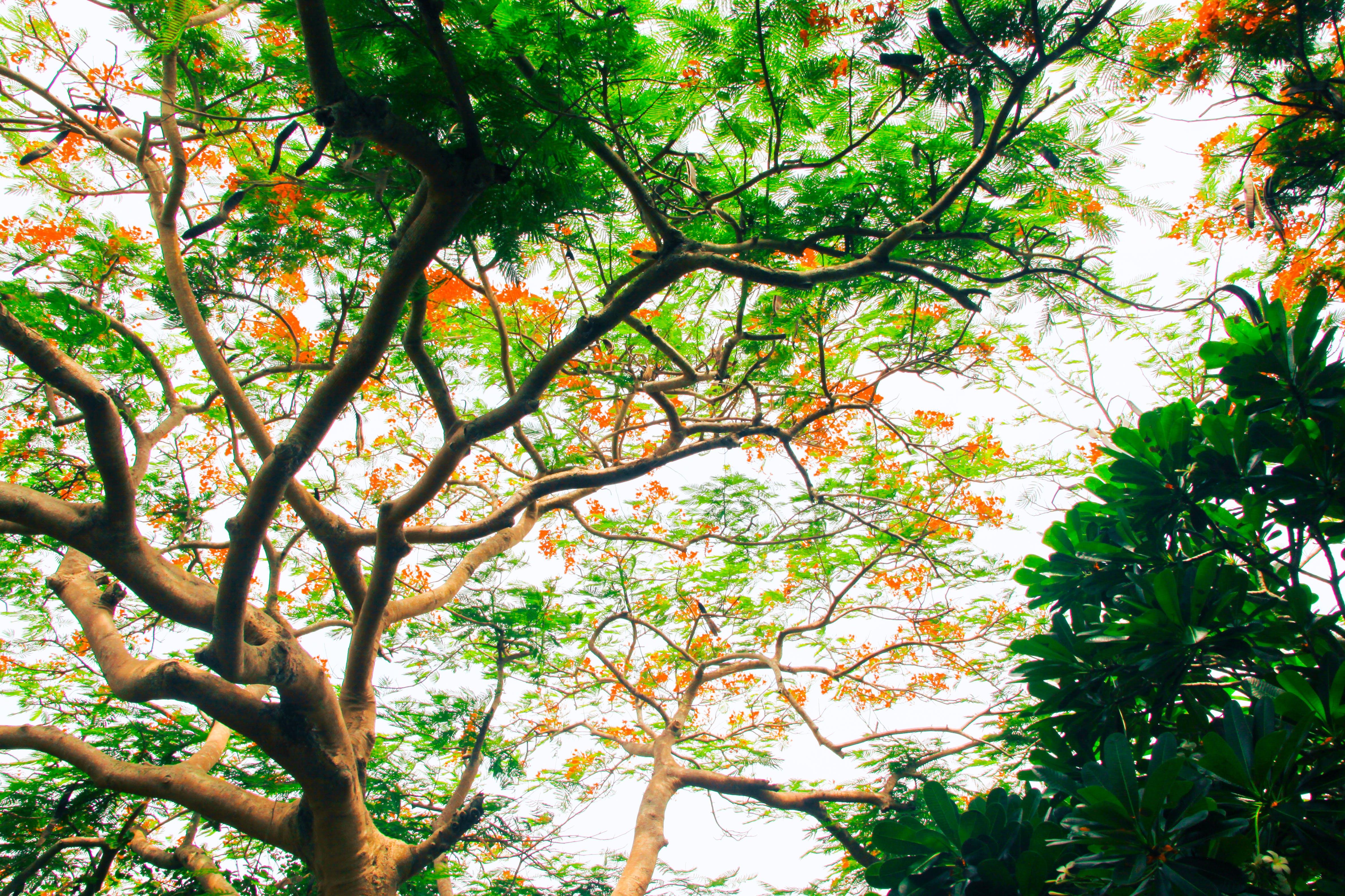 Immagine gratuita di alberi, ambiente, bellissimo, cielo
