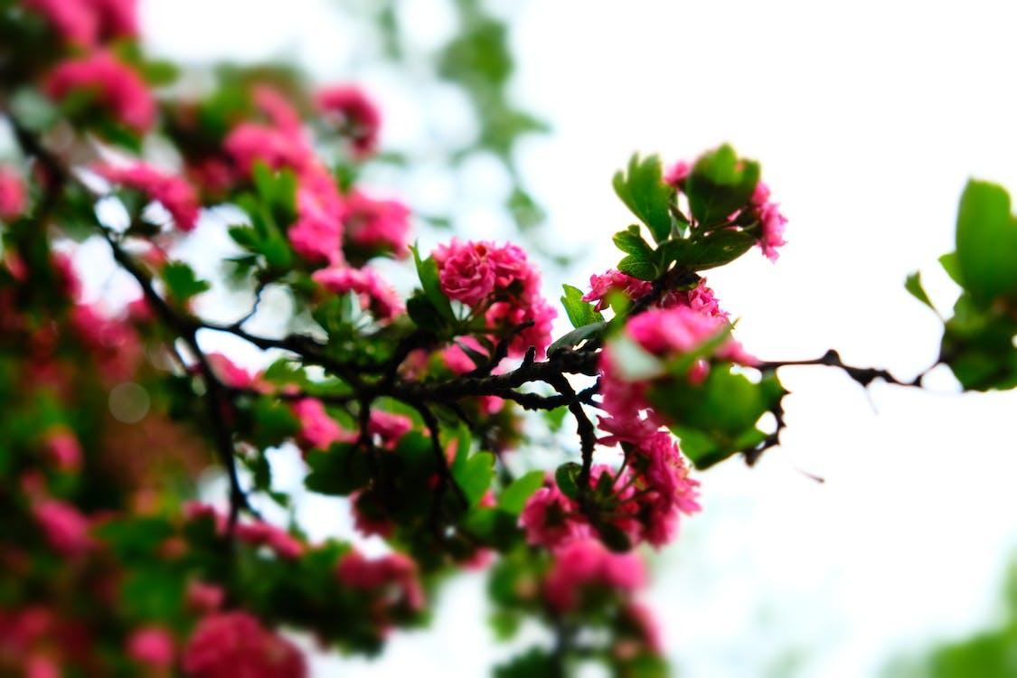 chi nhánh, hệ thực vật, hoa