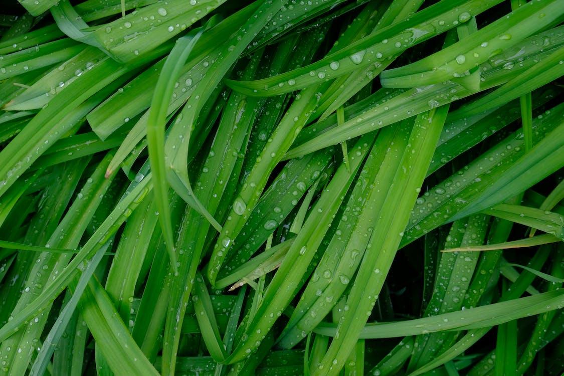 녹색, 물방울, 방울