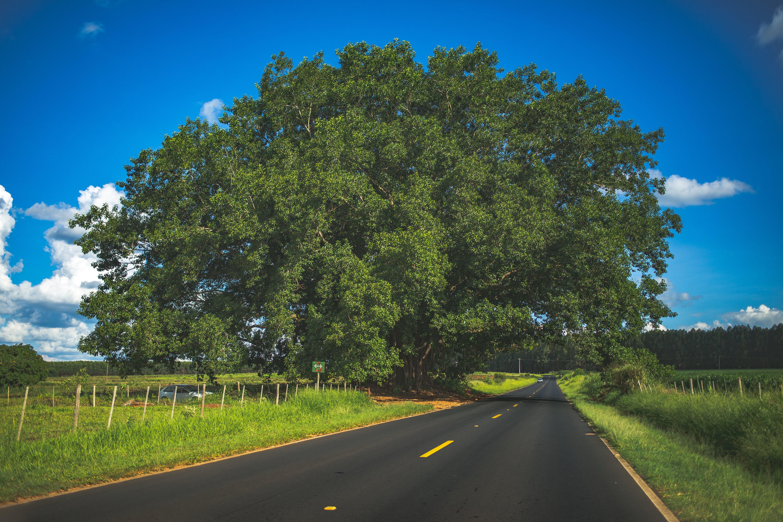 Gratis stockfoto met 4k achtergrond, achtergrond, asfalt, boom