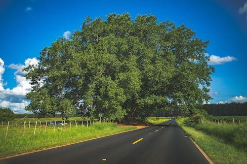 Foto d'estoc gratuïta de arbre, asfalt, carretera, fons de pantalla