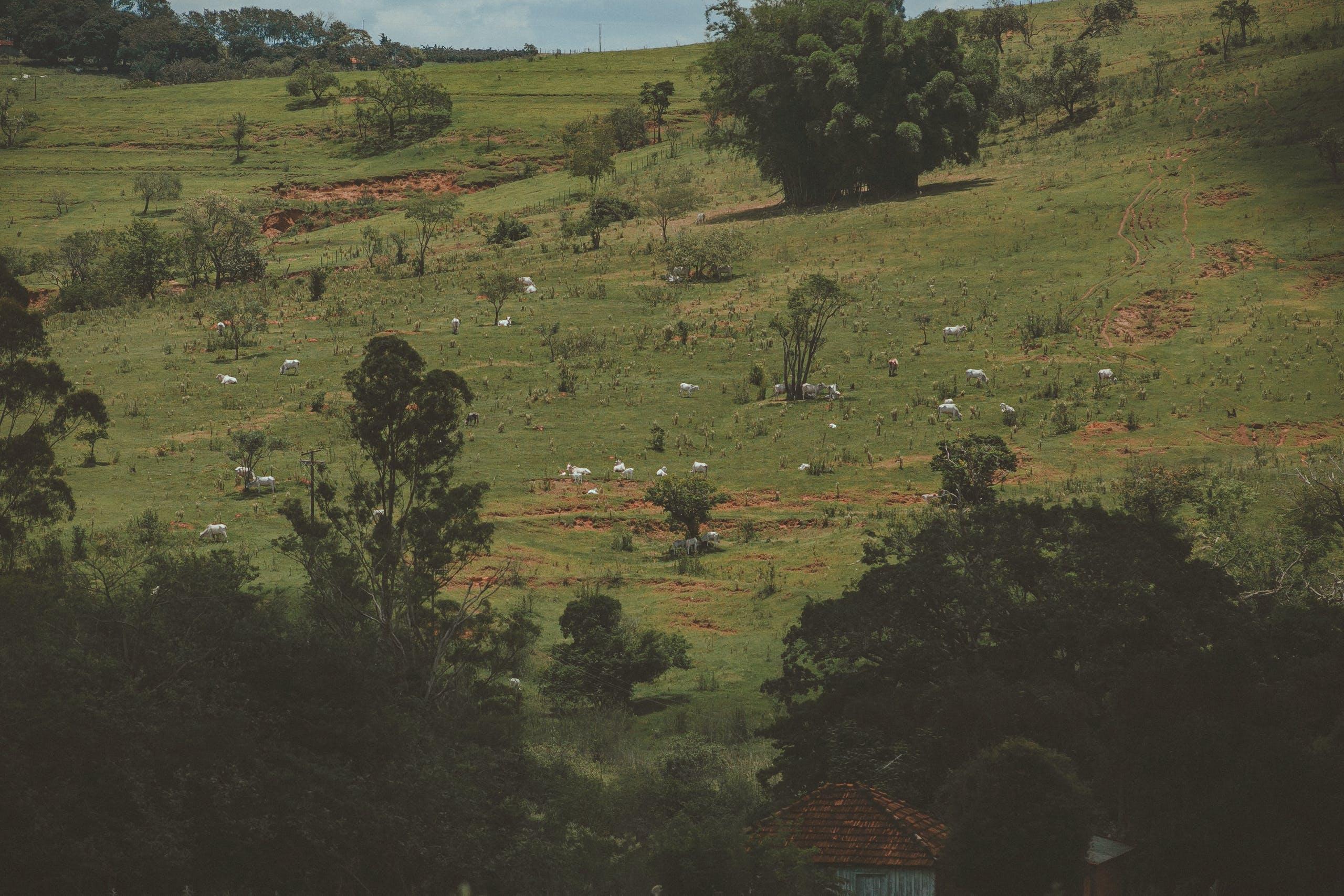 Gratis stockfoto met akkerland, berg, boerderij, boom