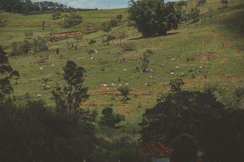 Ingyenes stockfotó állatok, fák, farm, festői témában