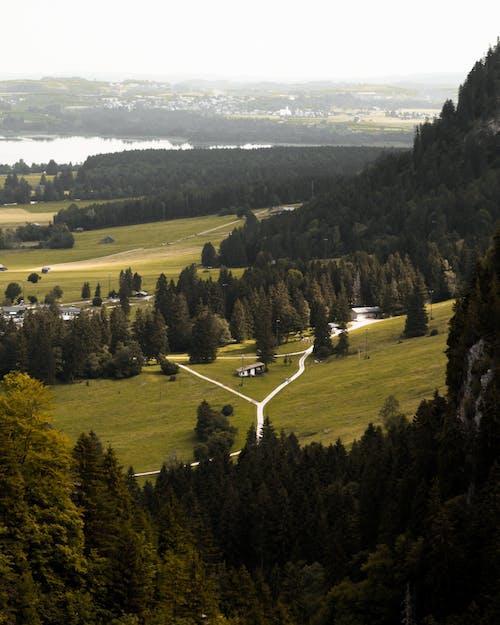 Foto d'estoc gratuïta de arbres, camp, paisatge, turó