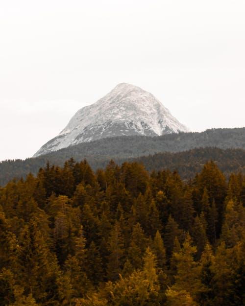 山, 岩山, 木, 森の中の無料の写真素材