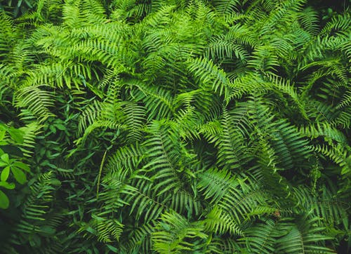 Ảnh lưu trữ miễn phí về cuộc sống tĩnh lặng, hệ thực vật, lá dương xỉ, màu xanh lá