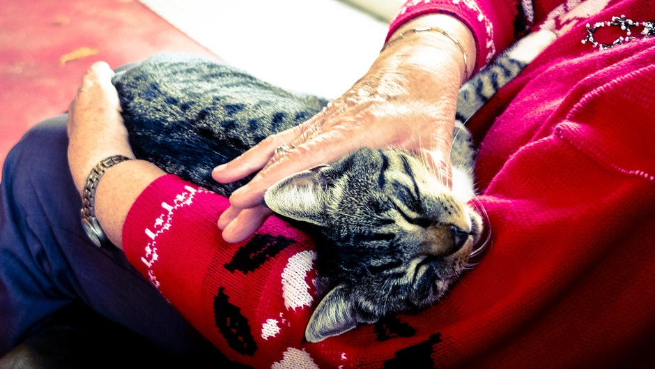 Silver Tabby Cat Sleeping on Person Hand