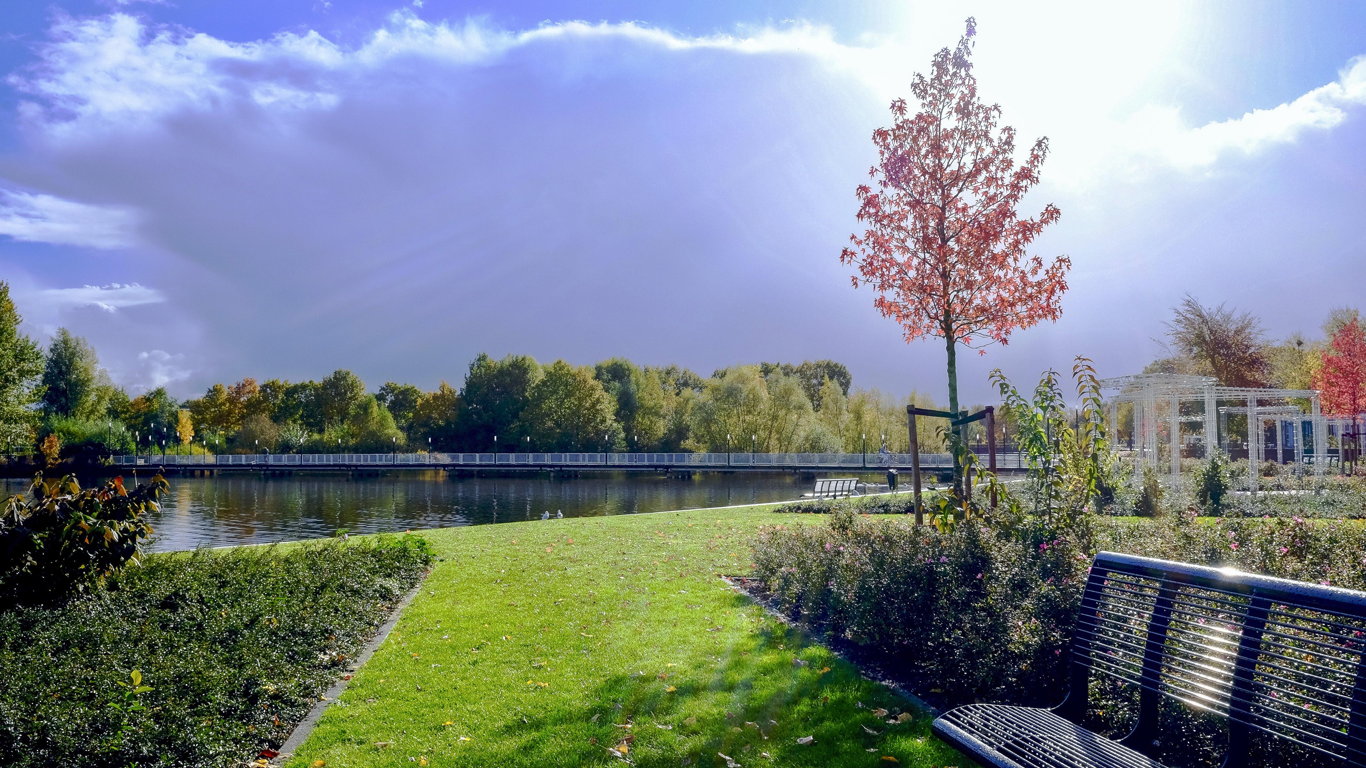 free stock photo of garden  grass  green