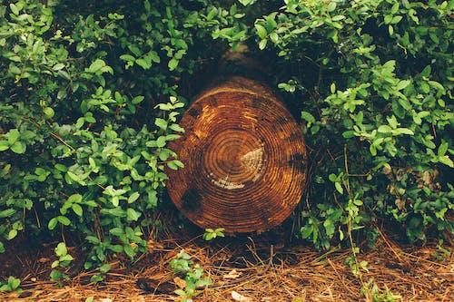 açık hava, ağaç, ağaç halkaları, ahşap içeren Ücretsiz stok fotoğraf