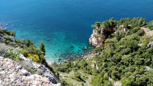 Free stock photo of beach, croatia, dubrovnik, forest