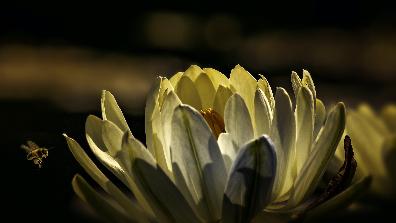 Foto profissional grátis de abelha, ao ar livre, atraente, aumento