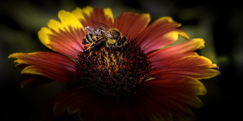 Základová fotografie zdarma na téma barevný, flóra, hmyz, krásná květina