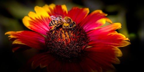 곤충, 다채로운, 벌, 선명한의 무료 스톡 사진