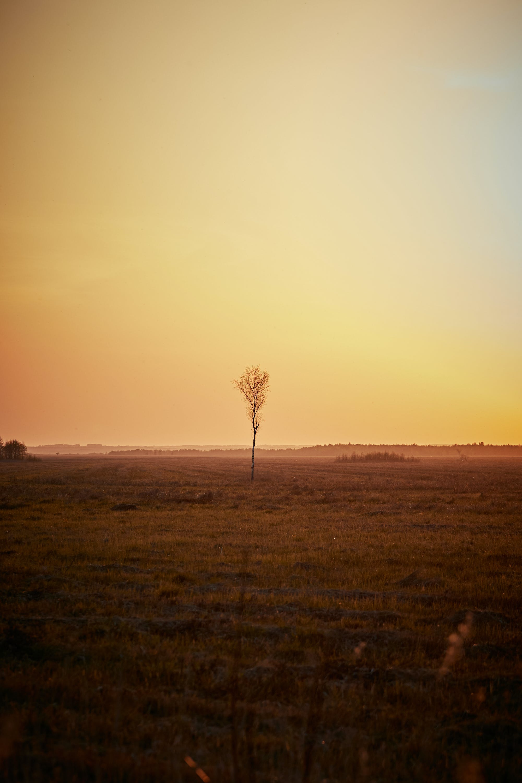 Free stock photo of backlit, beach, dawn, daylight