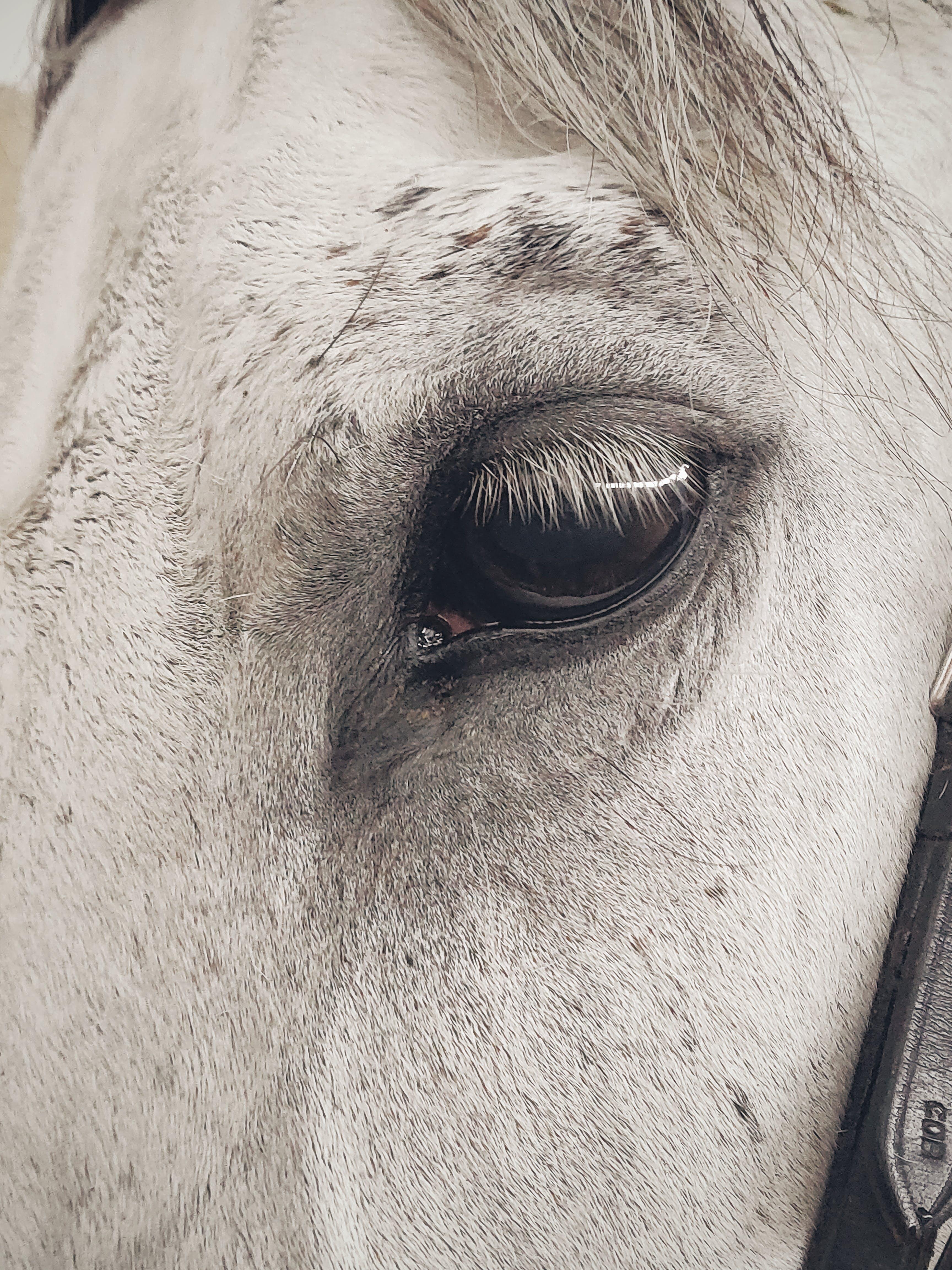 Foto profissional grátis de animal, cabeça, cavalo, close