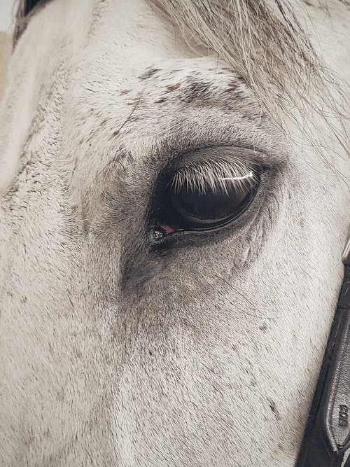 Foto stok gratis binatang, kepala, kuda, kuda betina
