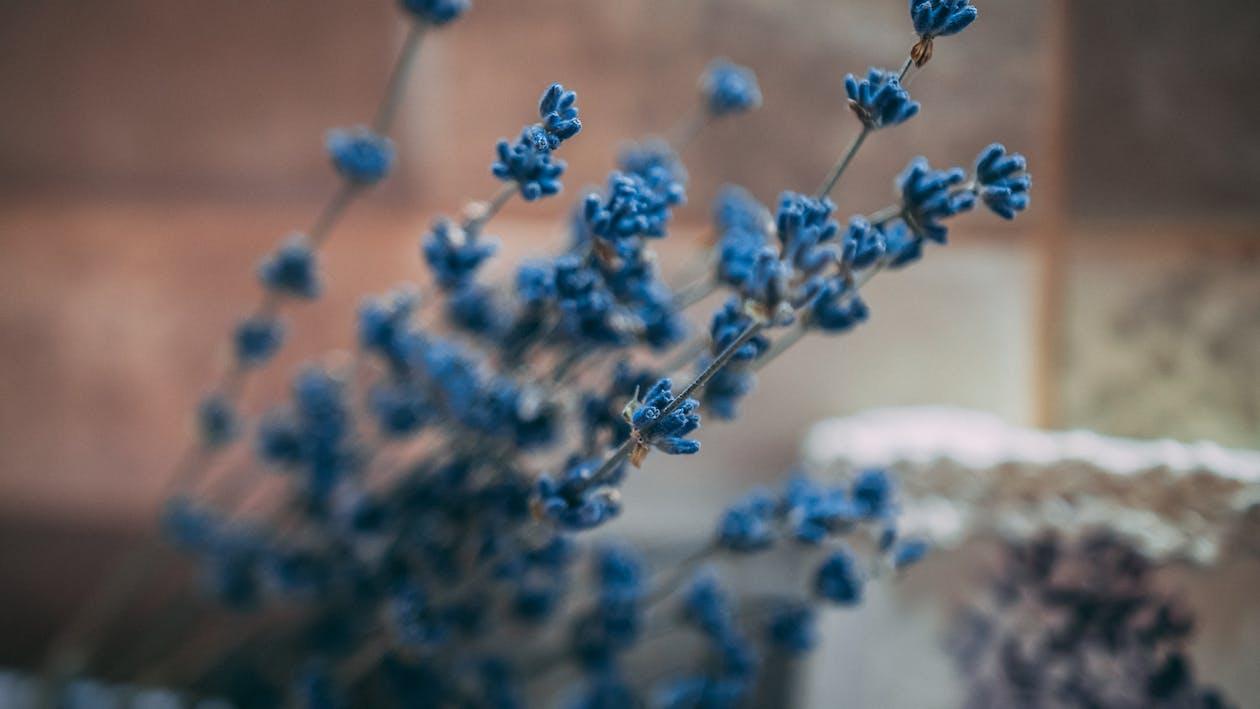flóra, hĺbka ostrosti, jemný