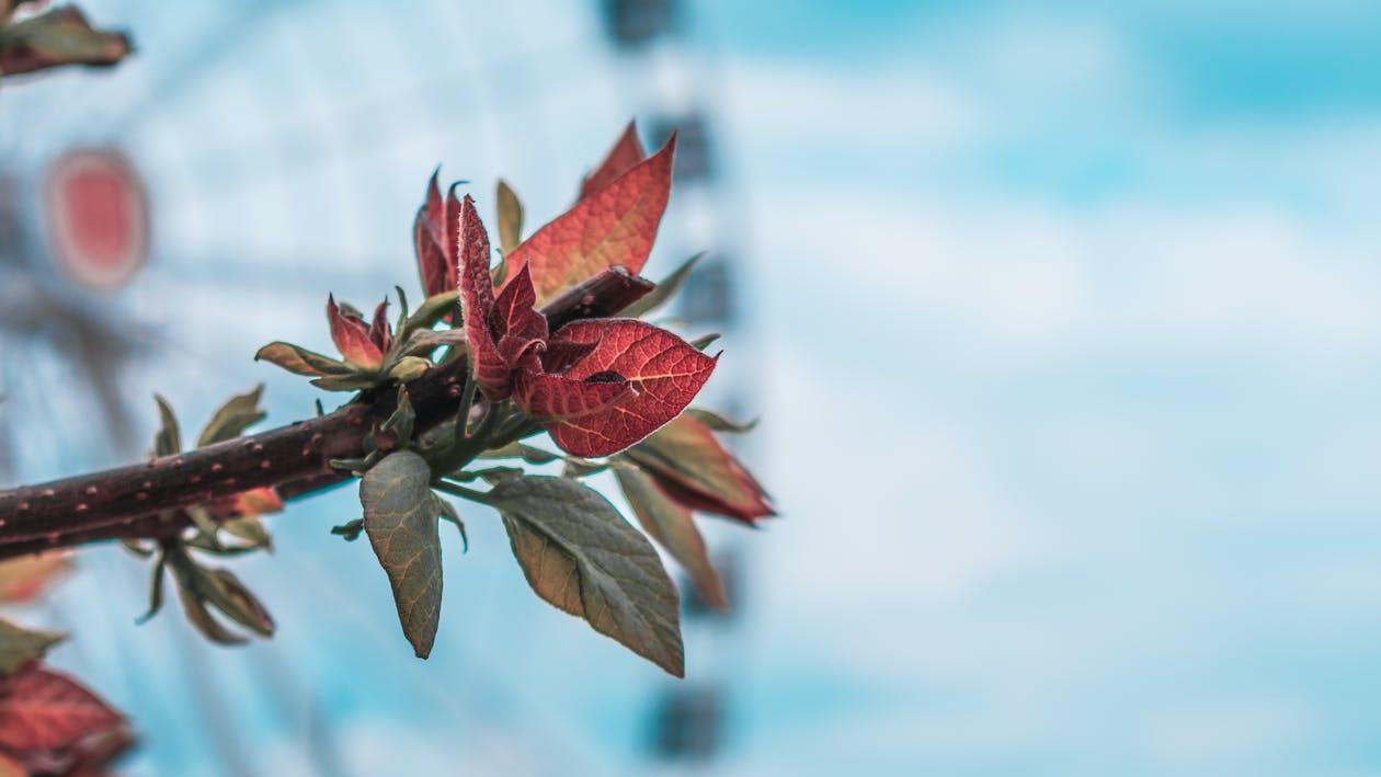 bokeh, branch, leaf