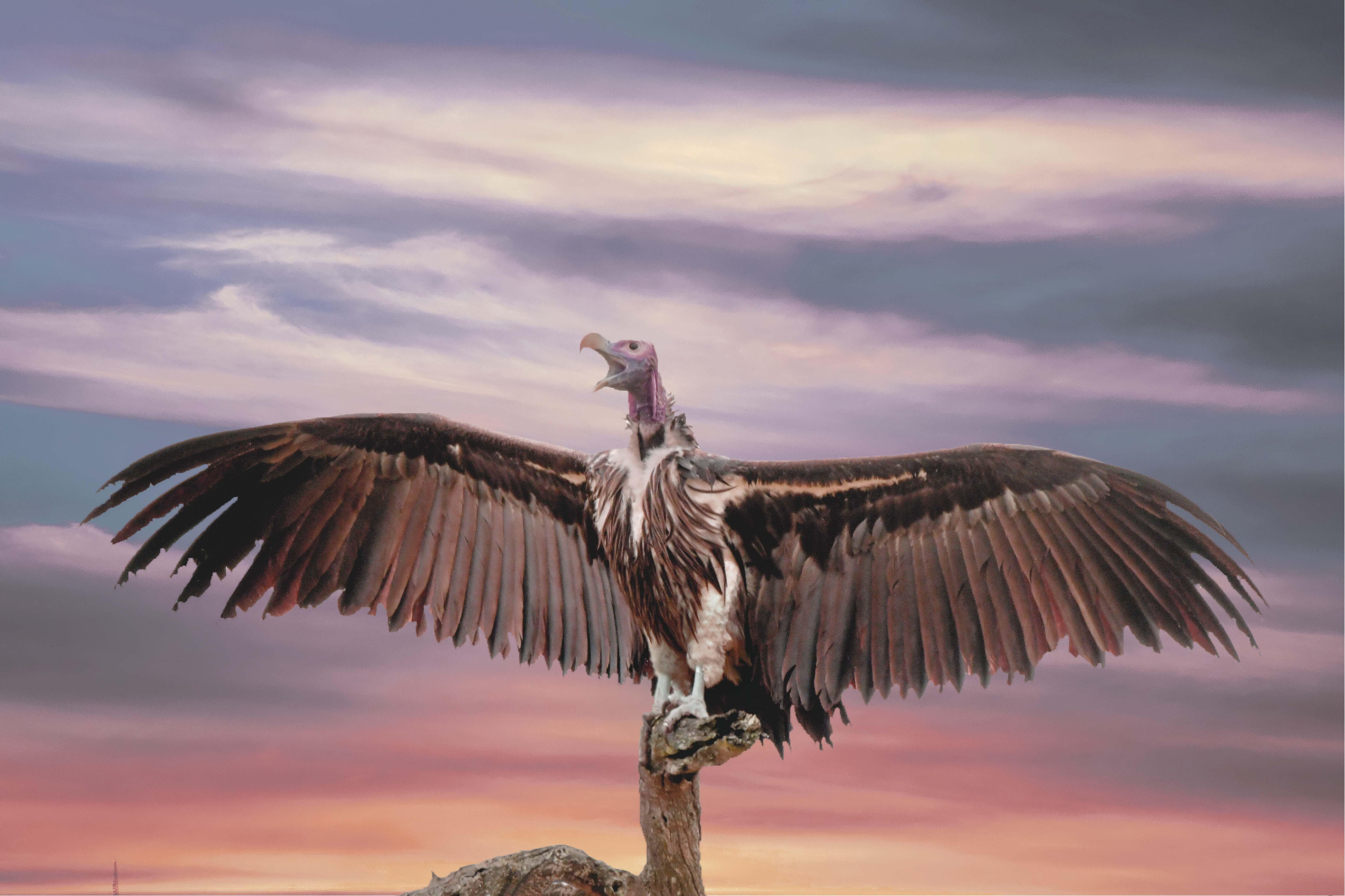 Foto profissional grátis de abutre, alvorecer, animais selvagens, animal