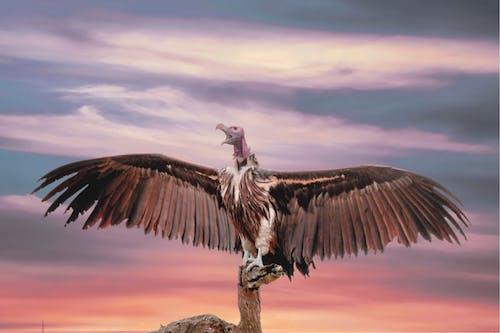 Imagine de stoc gratuită din animal, apus, aripi, călătorie