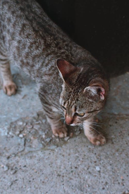 Fotos de stock gratuitas de adorable, animal, doméstico, fotografía de animales